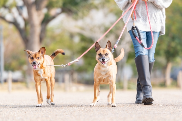 【磐田市の探偵の嫌がらせ調査】我が家の前に犬のフンを放置しているのは誰?