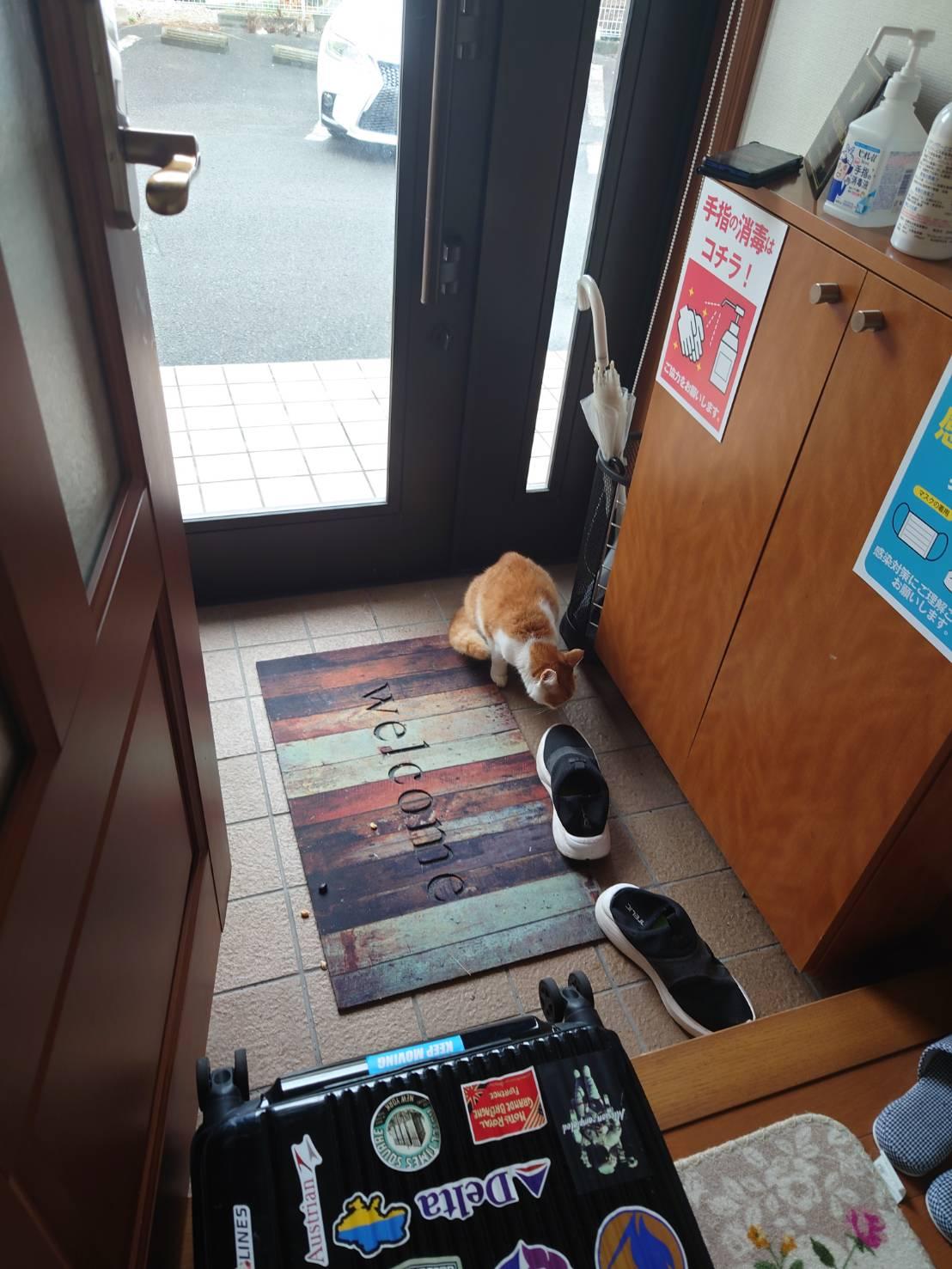 【ペット探偵 静岡】事務所が捕獲器に・・・